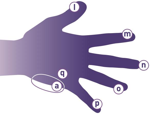 fingrerne
